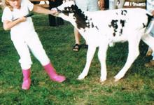 Andrea Soesbergen working with a calf in her early days of 4-H